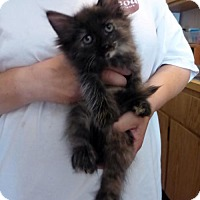 Adopt A Pet :: Ruby Dee - Cincinnati, OH