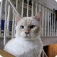 Adopt A Pet :: Raj - Lindsay, ON