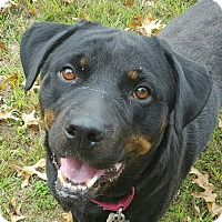 Rottweiler Mix Dog for adoption in Frederick, Pennsylvania - Jada