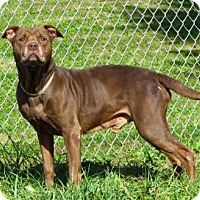 Pit Bull Terrier Mix Dog for adoption in Batavia, Ohio - Kujo