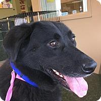 Adopt A Pet :: Keenan - LaGrange, KY