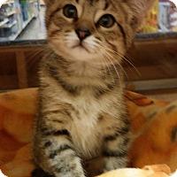 Adopt A Pet :: Arianna - Warrenton, MO