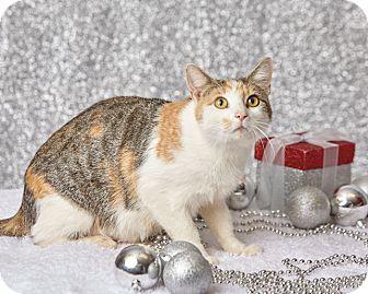 Calico Cat for adoption in Harrisonburg, Virginia - Lady Kissy McSassy