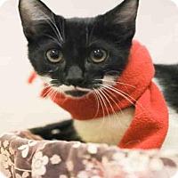 Adopt A Pet :: MADDOX - Waynesville, NC