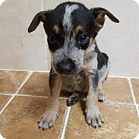 Adopt A Pet :: Mike - Key Largo, FL