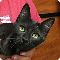 Adopt A Pet :: Seadra - Fairfax, VA