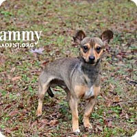 Adopt A Pet :: Sammy - Willingboro, NJ