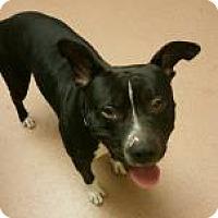 Adopt A Pet :: Django 3884 - Columbus, GA