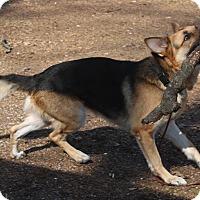 Adopt A Pet :: Lil Foot - Jerseyville, IL