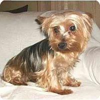Adopt A Pet :: Maria - Mooy, AL