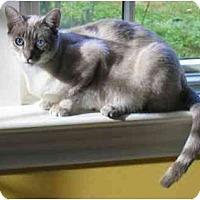 Adopt A Pet :: Sterling - Davis, CA