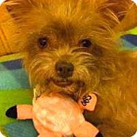 Adopt A Pet :: SNOOKY - Loxahatchee, FL