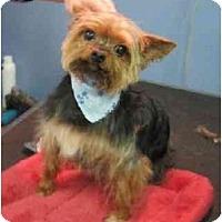 Adopt A Pet :: Wicket - Conroe, TX