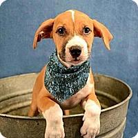 Adopt A Pet :: Timone - Lapeer, MI
