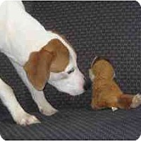 Adopt A Pet :: Deborah - Antioch, IL