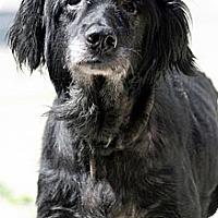 Adopt A Pet :: Fuzz - Leesburg, VA