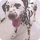 Adopt A Pet :: Rio