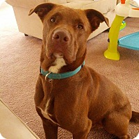 Adopt A Pet :: Jake - Lebanon, ME