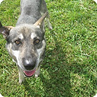 Adopt A Pet :: #427-14 ADOPTED! - Zanesville, OH