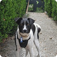 Adopt A Pet :: Charlee - Oakland, AR