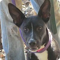 Adopt A Pet :: Cassie! - Sacramento, CA