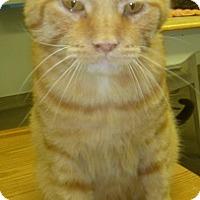 Adopt A Pet :: Opie - Hamburg, NY