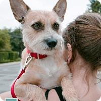 Adopt A Pet :: Mojave - ADOPTION PENDING! - Torrance, CA