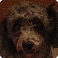 Adopt A Pet :: Penny - MINNEAPOLIS, KS