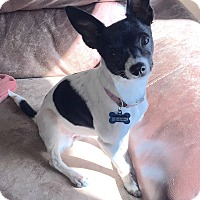 Adopt A Pet :: Rosie - Las Vegas, NV