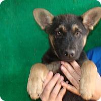 Adopt A Pet :: Zorro - Oviedo, FL