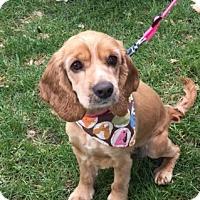 Adopt A Pet :: Jadyn-ADOPTED!! - Sacramento, CA