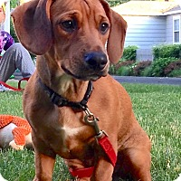 Adopt A Pet :: *Milo - PENDING - Westport, CT