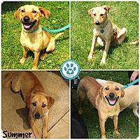 Adopt A Pet :: Summer - Kimberton, PA