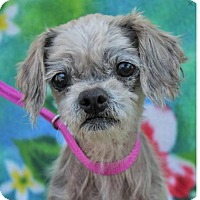 Adopt A Pet :: FOXI-Low fees/Senior - Red Bluff, CA