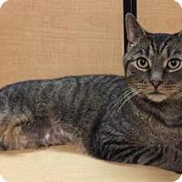 Adopt A Pet :: Ariel - Worcester, MA
