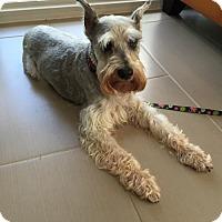 Adopt A Pet :: Tasha - Jupiter, FL
