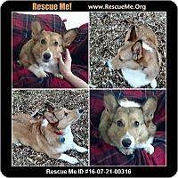 Adopt A Pet :: Jiggs - Lomita, CA
