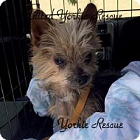 Adopt A Pet :: Toto - Long Beach, CA