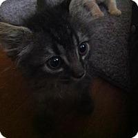 Adopt A Pet :: A394034 Onyx - San Antonio, TX