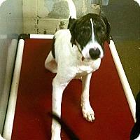 Adopt A Pet :: Jerico - Jacksonville, TX