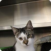 Adopt A Pet :: Martin - Sarasota, FL