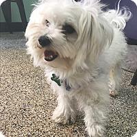 Adopt A Pet :: Reuben - Thousand Oaks, CA