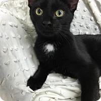 Adopt A Pet :: Eb - Paducah, KY