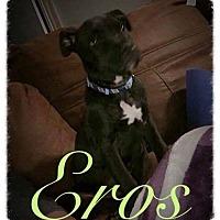 Adopt A Pet :: Eros - Garner, NC