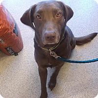 Adopt A Pet :: NELLIE - Gloucester, VA