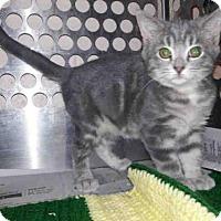 Adopt A Pet :: GRAHAM - Pittsburgh, PA