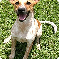Adopt A Pet :: Lexi 3 - Houston, TX