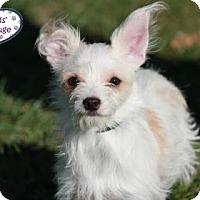 Adopt A Pet :: Laney - ADOPTION PENDING - Lee's Summit, MO