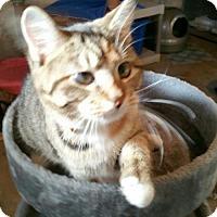Adopt A Pet :: Marilyn - Minneapolis, MN
