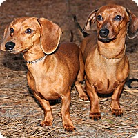 Adopt A Pet :: Larry & Moe - Forked River, NJ
